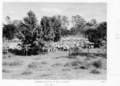 Queensland State Archives 5041 Sheep waiting to be crutched Tiree 1952.png