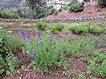 Quinta do Monte, Funchal, Madeira - IMG 6420.jpg