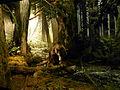 RBCM - Diorama Rain Forest 1.jpg