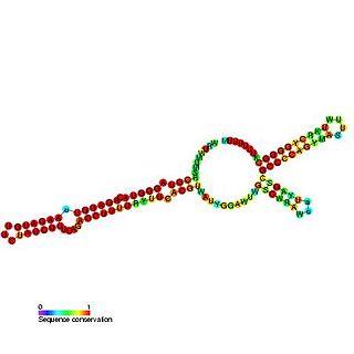 Spot 42 RNA