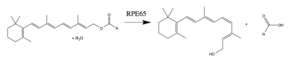 RPE65 - The reaction completed by RPE65 in the retinoid cycle.