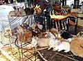Rabbits sold in Berastagi Market.jpg