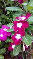 Rare flowers 05.jpg