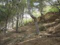 Restes Castell de Puigdelfí.jpg