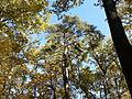 Rezerwat przyrody Dęby w Meszczach 12.35 01.jpg