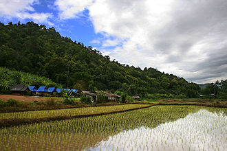 Rice production in Thailand - Rice plantation in Thailand