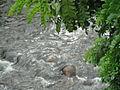 Rio cachoeiras de macacu 1.jpg