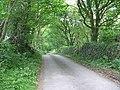 Road through woodland near Rhyd-yr-arian - geograph.org.uk - 804072.jpg