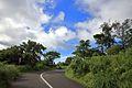 Road to Ponmudi Hills.jpg
