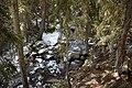 Rogers Pass Trail 05.jpg