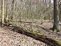Rohrwald sl30.jpg