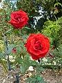 Roses au jardin du thabor - panoramio.jpg