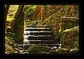 Rostrevor Oakwood - panoramio.jpg