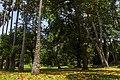 Royal Botanical Gardens, Peradeniya - panoramio (4).jpg