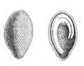 Roze fig. 42 et 43.png