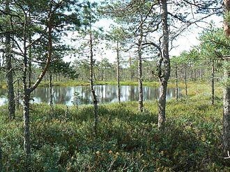 Valga County - Bog pool in Rubina bog