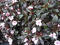 S2006 flowers 7.JPG