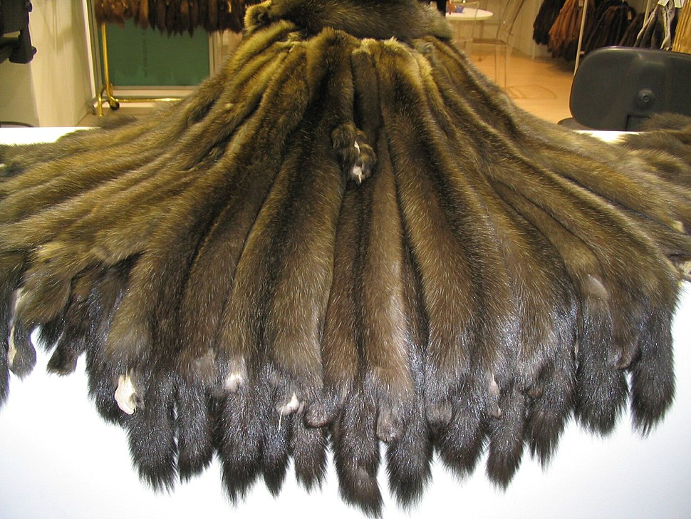 Sable skins Bargusinski