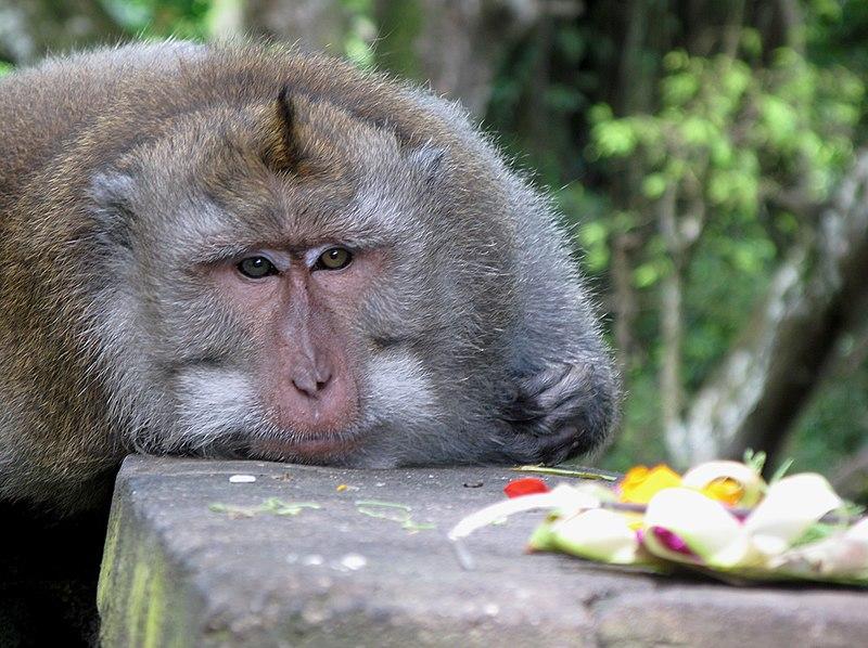 File:Sacred Monkey Forest - Indonesia, Ubud - panoramio.jpg