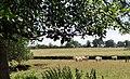 Saint-Forgeux Lespinasse élevage.jpg