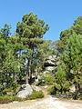 Saint-Pierre-lès-Nemours (77), le Mont Sarrasin par le GR 13, sens est-ouest 16.JPG