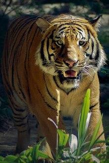 San Diego Zoo - Wikipedia