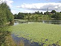 Sandy Lane Lake - geograph.org.uk - 62463.jpg