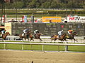 Santa Anita racetrack, March 24, 2013, fifth race.jpg