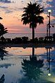 Santa Maria di Ricadi (VV) - tramonto - palma in controluce.jpg