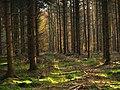 Schaumburger Wald 2015-10-31 - BA312916.jpg