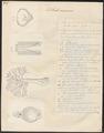 Selache maxima - tanden - 1700-1880 - Print - Iconographia Zoologica - Special Collections University of Amsterdam - UBA01 IZ14100097.tif