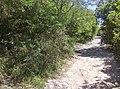 Sendero Principal hacia el Cerro de la Silla.jpg