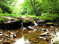 Seneca-creek-camp-waterfalls - West Virginia - ForestWander.jpg