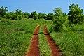 Sentier dans la savane.jpg