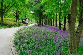 Brownfield land - Pedestrians walking along hillside path in Seonyudo Park