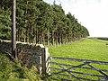 Shelter belt on the Doctor's Gate road - geograph.org.uk - 269509.jpg