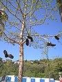 Shoes tree 0002.JPG