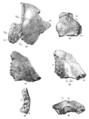 Sinanthropus Skulls VI and VII.png