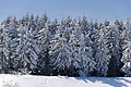 Skiing in Oberhof March 2013-03.jpg