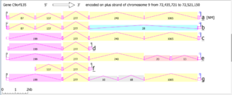 C9orf135 - Splice Variants of c9orf135 based on NCBI AceView
