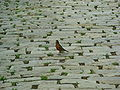 Small bird on a pavement.JPG