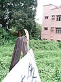 Small lizard on a billboard - panoramio.jpg