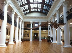 Alabama Museum of Natural History - View of the Grand Gallery of Smith Hall looking North.