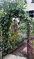 Smithsonian Gardens in October (22721335376).jpg