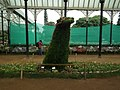 Snap from Lalbagh Flower Show Aug 2013 8130.JPG