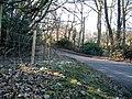 Snowdrop bedecked verge - geograph.org.uk - 130828.jpg