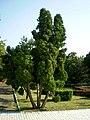 Somewhere in Eforie Sud - panoramio (1).jpg