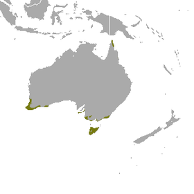 Southern Brown Bandicoot area.png