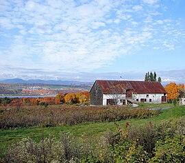 île Dorléans Wikipedia