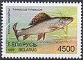 Stamp of Belarus - 1997 - Colnect 85735 - Grayling Thymallus thymallus.jpeg